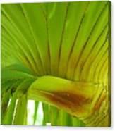 Silk Floss Palm Canvas Print
