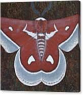 Silk Moth Canvas Print