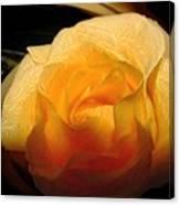Silken Yellow Rose Canvas Print