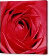 Silky Petals Canvas Print