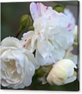 Silky Rose 2 Canvas Print