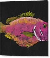 Silky Snapper Canvas Print