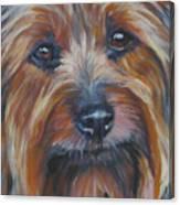 Silky Terrier Canvas Print