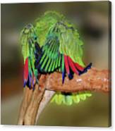 Silly Amazon Parrot Canvas Print