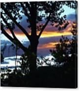 Silohuettes Of Trees Canvas Print