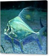 Silver Fish Canvas Print