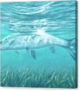 Silver Flash Canvas Print