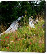 Silver Forest Meadow Canvas Print