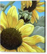 Silver Leaf Sunflower Growing To The Sun Canvas Print