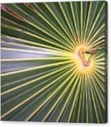 Silver Palm  Canvas Print
