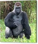 Silverback Gorilla 2 Canvas Print