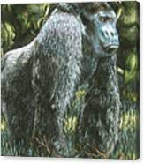 Silverback-king Of The Mountain Mist Canvas Print
