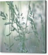 Silvery Green Grasses Canvas Print