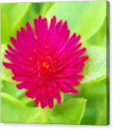Simple Magenta In A Garden Of Green Canvas Print