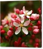 Simple Savory Spring Canvas Print