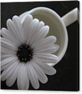 Simple White Daisy Canvas Print