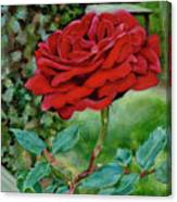 Simply A Rose Canvas Print