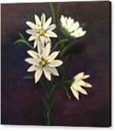 Simply Daisies Canvas Print