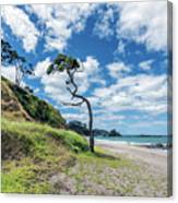 Simply New Zealand Canvas Print