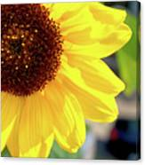 Simply Sunflower Canvas Print