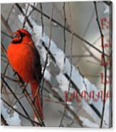 Singing Cardinal Christmas Card Canvas Print