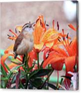 Singing Wren In The Lilies Canvas Print