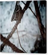 Single Bat Hanging Alone Canvas Print