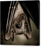 Single Bat Hanging Portrait Canvas Print