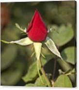 Single Bright Red Rose Bud Canvas Print