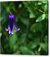 Single Clematis Bell Blossom Canvas Print
