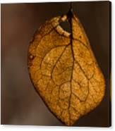 Single Fall Leaf Canvas Print
