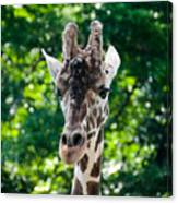 Single Giraffe Canvas Print