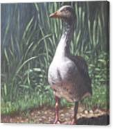 Single Goose Canvas Print
