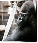 Single Gorilla Sitting Alone Canvas Print