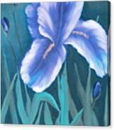 Single Iris With Buds Canvas Print