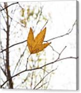 Single Leaf In Fall Canvas Print