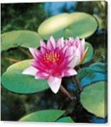 Single Lilly Canvas Print