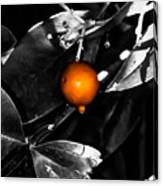 Single Orange Berry Canvas Print