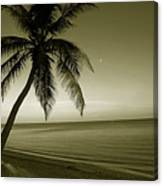 Single Palm At The Beach Canvas Print