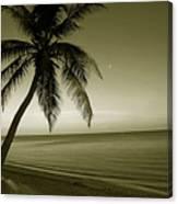 Single Palm At The Beach Canvas Print