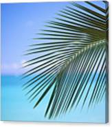 Single Palm Frond Canvas Print