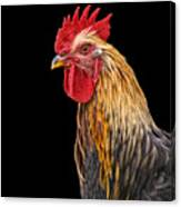 Single Rooster Canvas Print