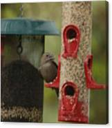 Single Songbird At Feeder Canvas Print