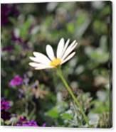 Single White Daisy On Purple Canvas Print