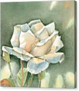 Single  White Rose Canvas Print