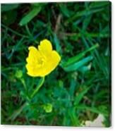 Single Yellow Buttercup Canvas Print