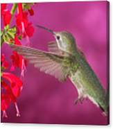 Sipping At The Salvia Canvas Print
