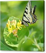 Sipping Swallowtail Canvas Print