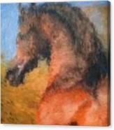 Sir Gallant Canvas Print