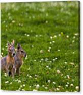 Sitting In Clover Canvas Print